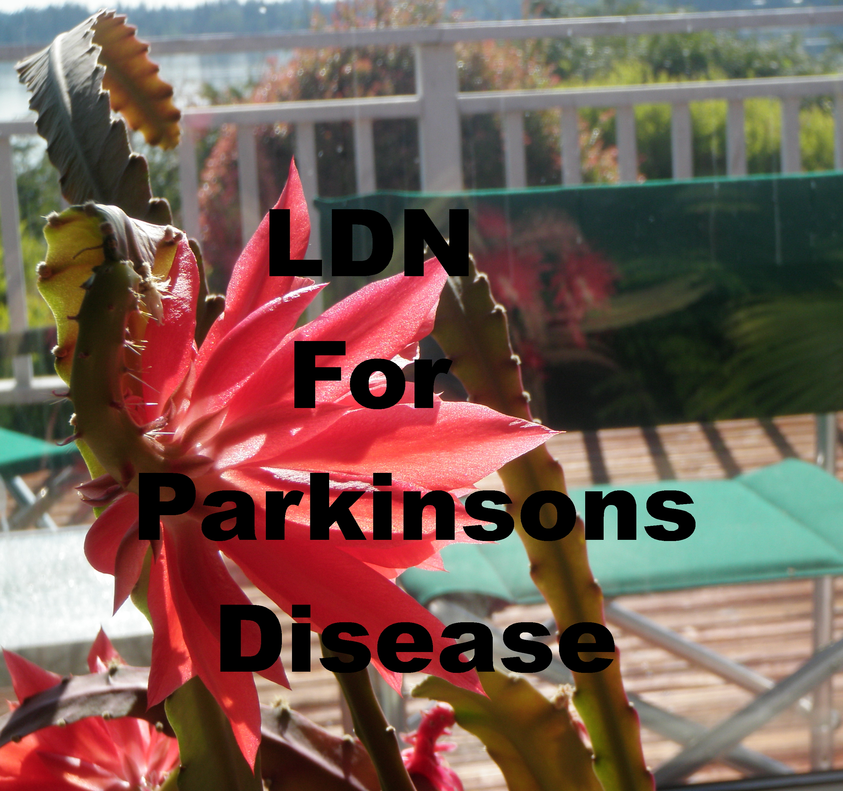 LDN for Parkinsons Disease
